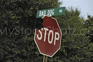 Bad Dog Road