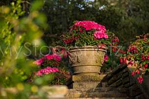 Bellingrath Gardens - Spring Morning