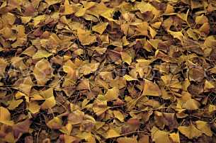 Bed of fallen leaves