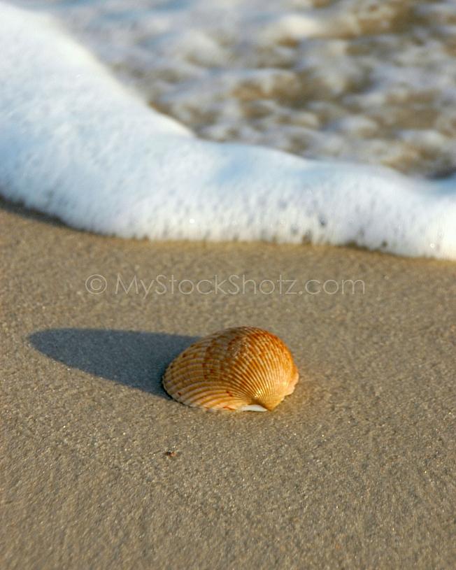 Solitary sea shell