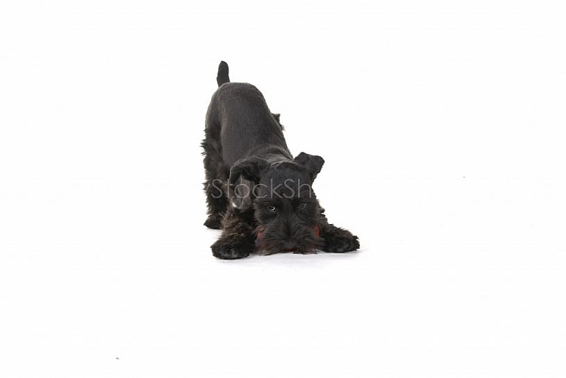 Little Playful Puppy