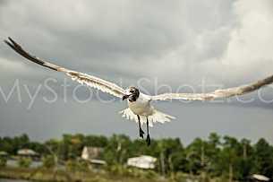 Gull at Dauphin Island