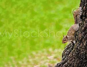Squirrel in Bienville Square