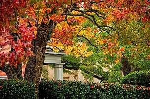Fall Colors in Downtown Mobile