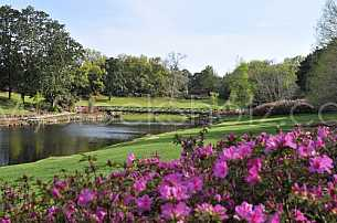 Azaleas in Bloom at Bellingrath Gardens