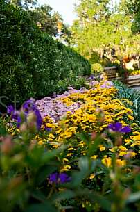 Bellingrath Gardens & Home - Mums in Bloom - 2010